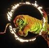 Цирки в Изобильном